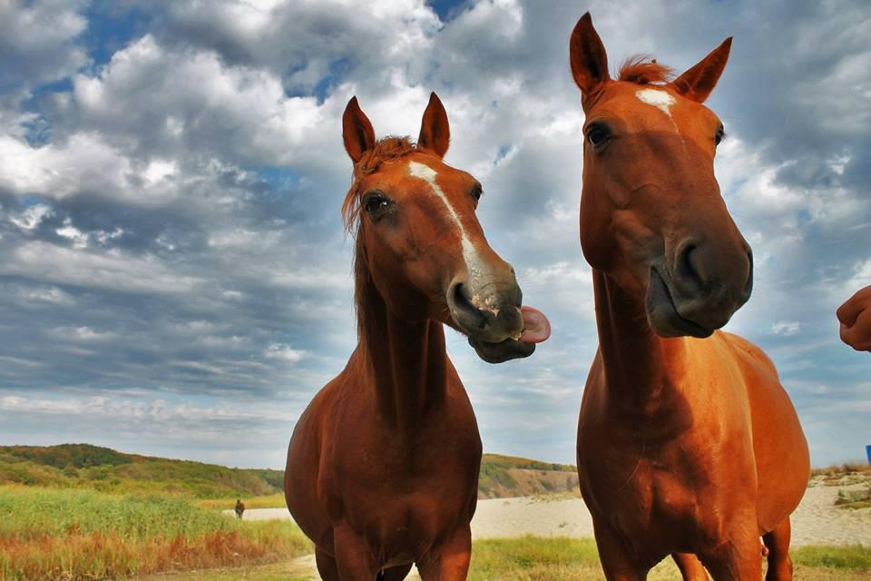 2 Happy Horses